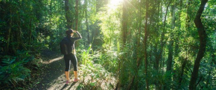 5 bonnes raison de marcher en pleine nature