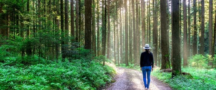 Qu'est-ce que la sylvothérapie ou bain de forêt