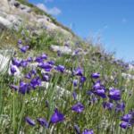 Stage Randonnée & Cueillette des Plantes Sauvages en Montagne